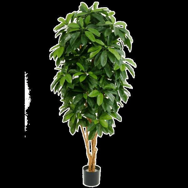Giant Schefflera Tree - kunstplant