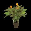 Strelitzia Reginae- kunstplant