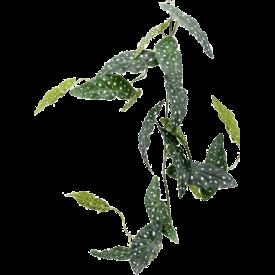 Fleur.nl - Begonia Maculata  - kunstplant