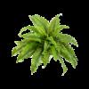 Nephrolepis Boston - kunstplant