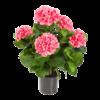 Hydrangea Pot Pink - kunstplant