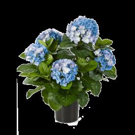 Fleur.nl - Hydrangea Pot Blue - kunstplant