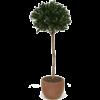 Laural Ball - kunstplant