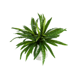 Fleur.nl - Asplenium - kunstplant