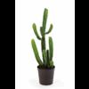 Finger Cactus Large - kunstplant