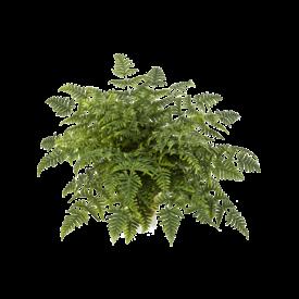 Fleur.nl - Athyrium Fern - kunstplant