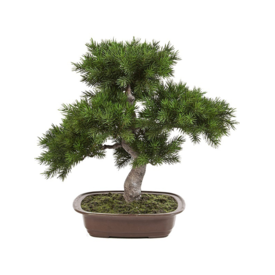 Fleur.nl - Bonsai Pinus - kunstplant