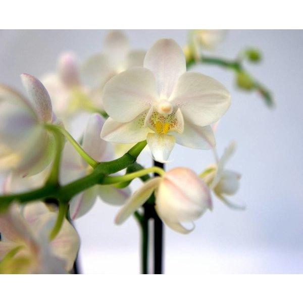 Pokon Verzorging Spray Orchids
