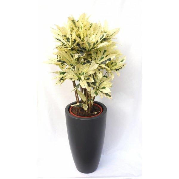 Croton struik iceton in pot Elho