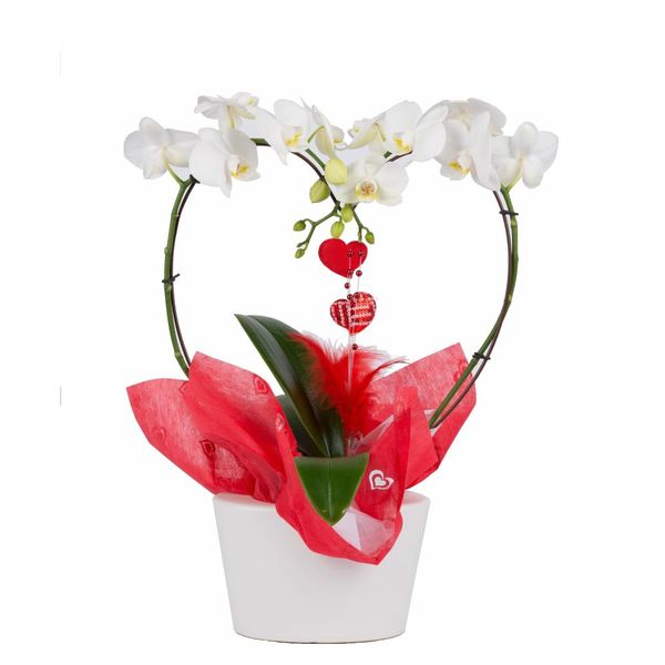 Orchidee With Love Heart