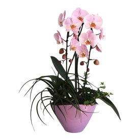 Fleur.nl - Orchidee pink in pot Cascade Complete