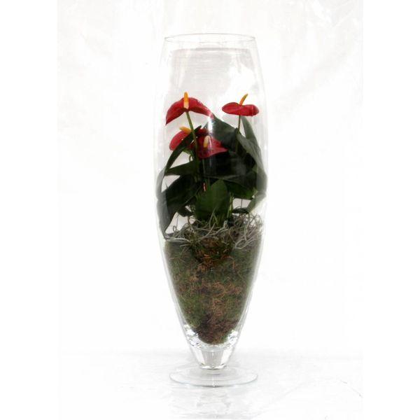 Anthurium Rood in vaas exclusiv (large)