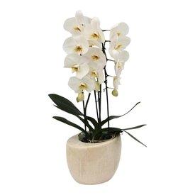Fleur.nl - Orchidee White Cascade in pot vintage