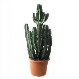 Fleur.nl - Cactus Euphorbia Large vertakt