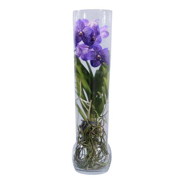 Vanda in Vase Excusiv Purple