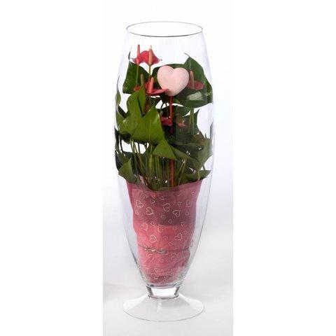 Anthurium roze in vaas Exclusiv