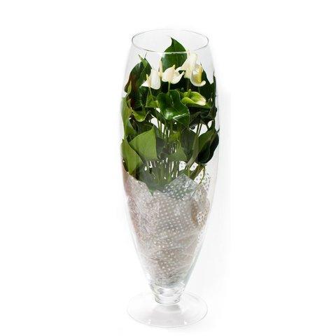 Anthurium Wit in vaas Exclusiv Large