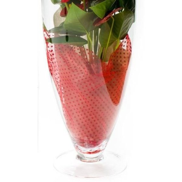 Anthurium Rood in vaas Majest