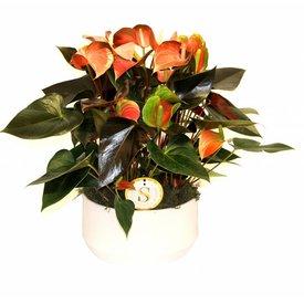 Fleur.nl - Anthurium Oranje in keramische schaal wit