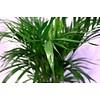 Voeding Palm
