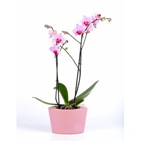 Fleur.nl - Orchidee Pink in pot Pink