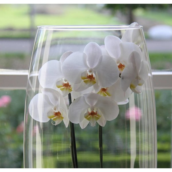 Orchidee White in vase Majestic