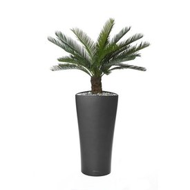 Fleur.nl - Cycas Palm in watergevende pot antraciet