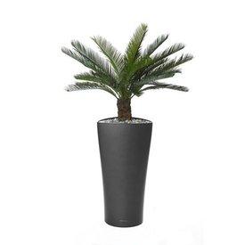 Fleur.nl -Lechuza Cycas Palm in watergevende pot Delta