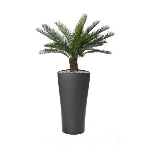 Cycas Palm in watergevende pot antraciet