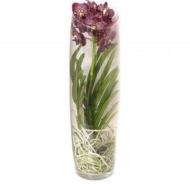 Fleur.nl - Vanda in Vase Lisann Red