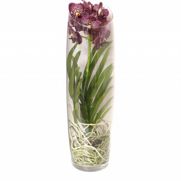 Vanda in Vase Lisann Red