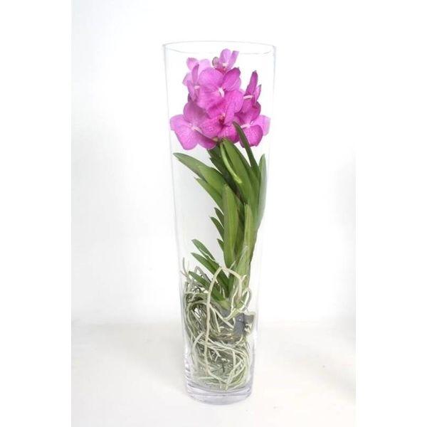 Vanda in Vase Lisann Pink