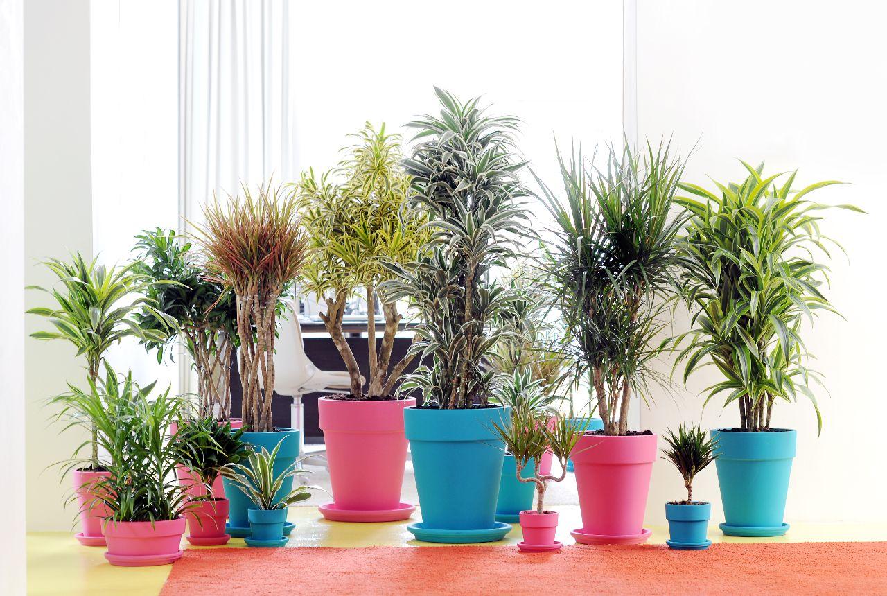 planten bij elkaar zetten