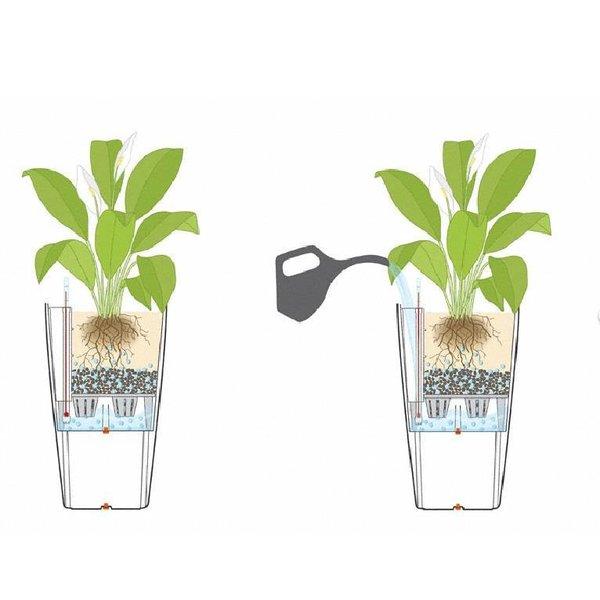 Lechuza Asplenium in watergevende pot Rondo
