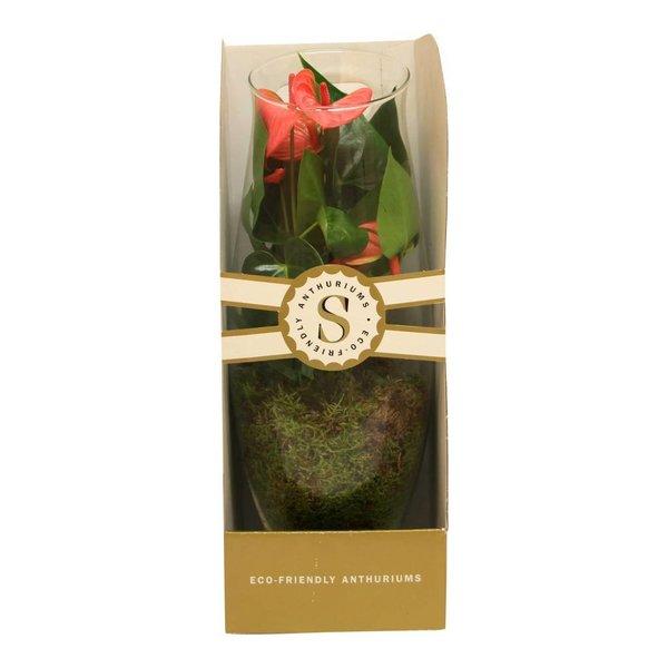 Anthurium roze in vaas Exclusiv large