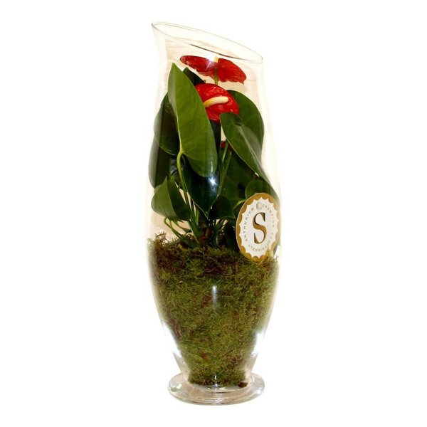 Anthurium Red in vaas Exclusiv