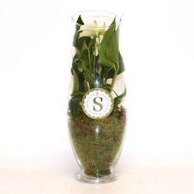 Fleur.nl - Anthurium Wit in vaas Exclusiv
