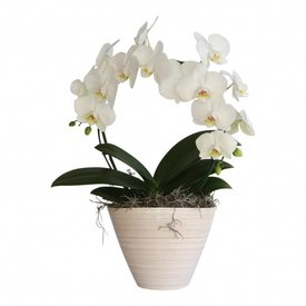 Fleur.nl - Orchidee White Mirror in pot