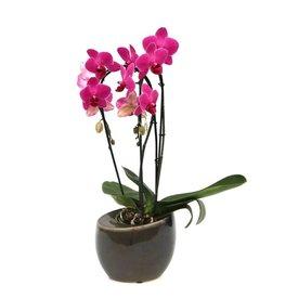 Fleur.nl - Orchidee Purple in pot vintage