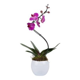 Fleur.nl - Orchidee Pink Twister in White pot