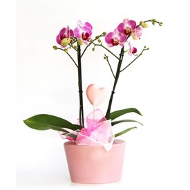 Fleur.nl - Orchidee Pink Love