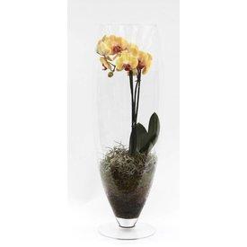 Fleur.nl - Orchidee Yellow in vaas Majestic