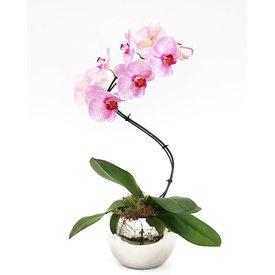 Fleur.nl - Orchidee Pink Twister in Silver pot