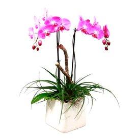 Fleur.nl - Orchidee Pink in pot wit