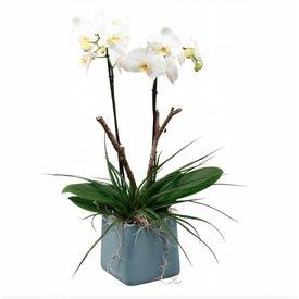 Fleur.nl - Orchidee White Square