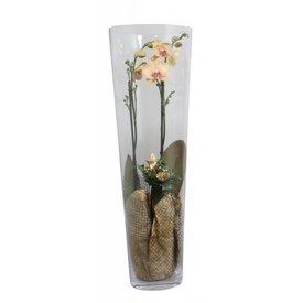 Fleur.nl - Orchidee yellow golden glas