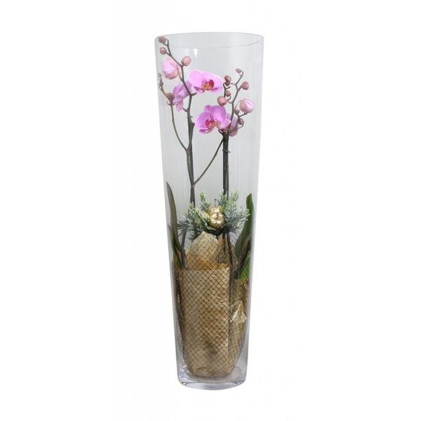 Orchidee pink golden glas