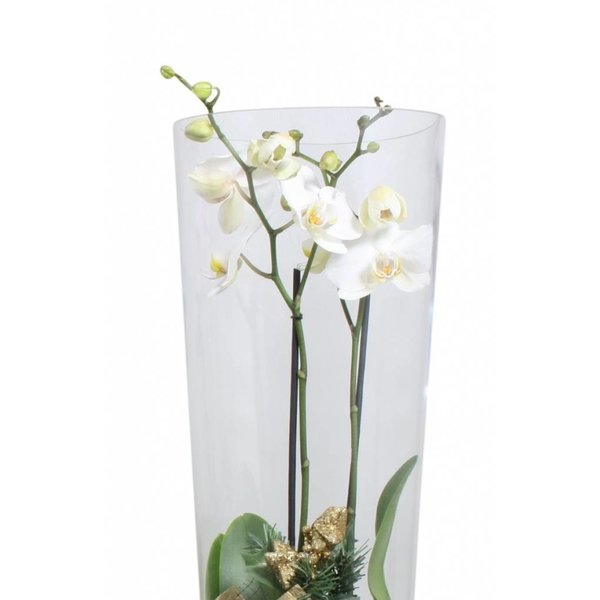 Orchidee white golden glas