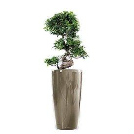 Grote Hoge Plantenpot.Grote Kamerplanten In Pot Bestellen Makkelijk En Compleet Fleur Nl