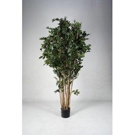 Fleur.nl - Ficus Exotica - kunstplant